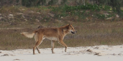 Fraser Island 15. – 18. Juni